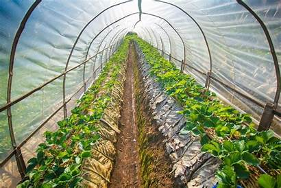 Hydroponic Farming Hydroponics Organic Certification Garden Primeimages