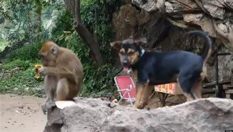 Puppy Wants Monkey's Banana, Monkey Says No (VIDEO) | HuffPost