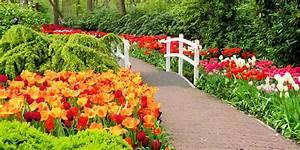 Bilder Blumen Kostenlos Downloaden : august 2015 monatswettbewerb natur blumen am wegesrand fotocommunity ~ Frokenaadalensverden.com Haus und Dekorationen