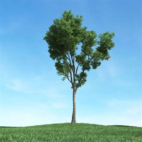 tree with trunk 3d model obj cgtrader