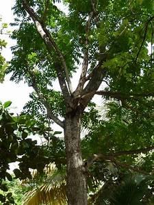 La Foret Moyenne  Ecosysteme Tropical  Guadeloupe