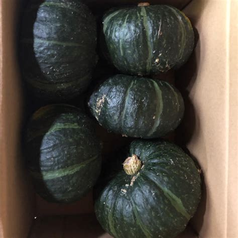 坊ちゃん かぼちゃ 栽培