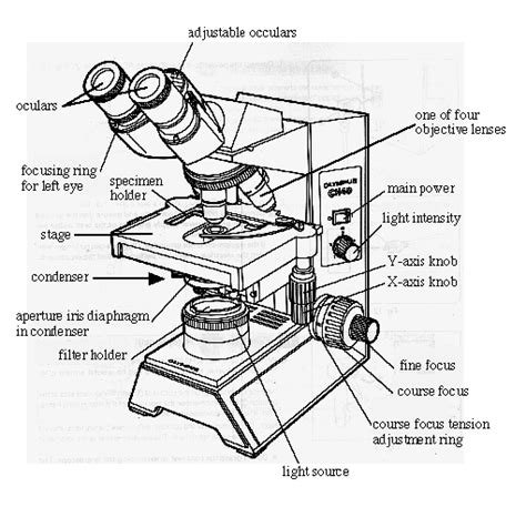Microscope Quiz Quizlet Anatomy And Physiology I Coursework Microscope A P
