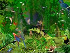 Jungle Animals Wallpaper  Jungle Drawing With Animals