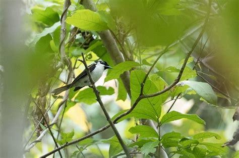 daftar nama nama burung langka  indonesia lengkap