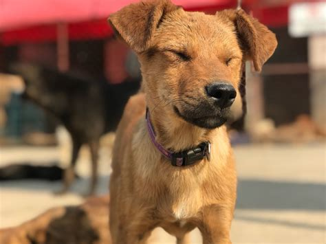 Rescuing A Dog From Abroad  International  Ee  Adoption Ee   Stories Dog International