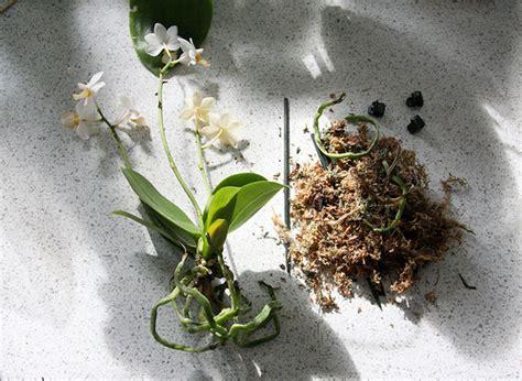 entretien archives page 3 sur 6 entretenir une orchid 233 eentretenir une orchid 233 e page 3