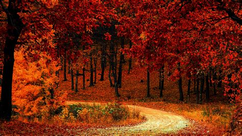 Autumn Wallpapers by Wallpaper Autumn Park Fall Foliage Hd 5k Nature 16422