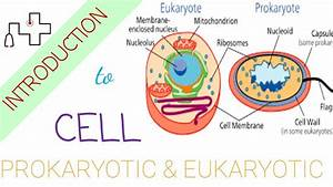 Definition Of Cell  Prokaryotic Cell And Eukaryotic Cell