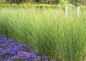 Welches Gras Als Sichtschutz : pflanzen als sichtschutz welche kennt ihr forum goolive deine freunde community ~ Sanjose-hotels-ca.com Haus und Dekorationen