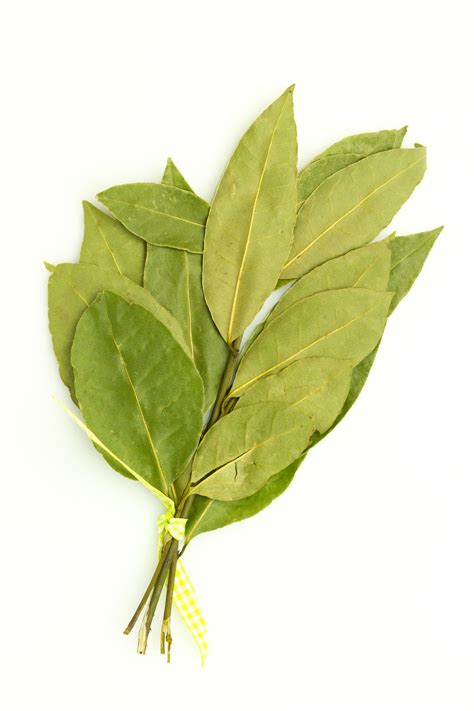 bay leaf replacement substitution for bay leaf theleaf co