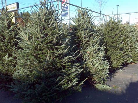 christmas tree farm chattanooga tn catchy collections of christmas tree farm chattanooga tn 8691