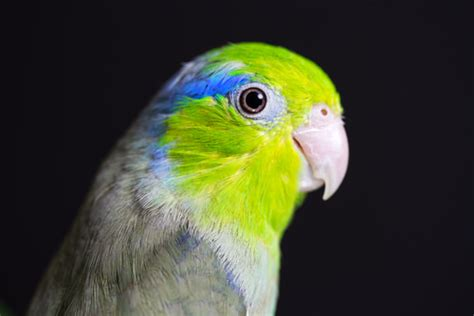 top 10 best pet birds for every woman pets pets care