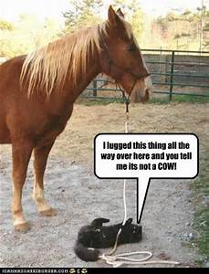 funny - horse pictures with captions - very funny pictures