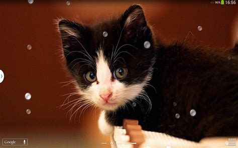 cute cats  wallpaper android apps  google play