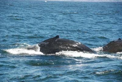 Stagnaro Charter Boats Santa Cruz Ca by Stagnaro Sport Fishing Charters And Whale Watching