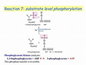 How Much Atp Is Produced From Substrate Level