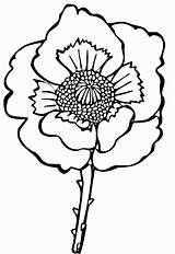 Poppy Coloring Flower Kleurplaat Klaproos Colorare Papavero Disegno Disegni Easy Gratis Mohnblume Kolorowanki Stampare Colorat Desenat Supercoloring Maci Mac Poppies sketch template