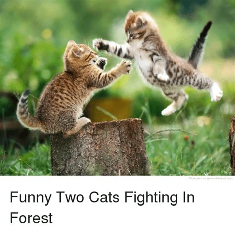 Funny Fighting Memes - more pics on wwwobstacolcom funny two cats fighting in forest cats meme on sizzle