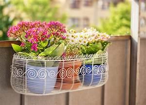 Welche Pflanzen Für Balkon : bildquelle sophie mcaulay ~ Michelbontemps.com Haus und Dekorationen