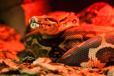 care   pet snake caring pets