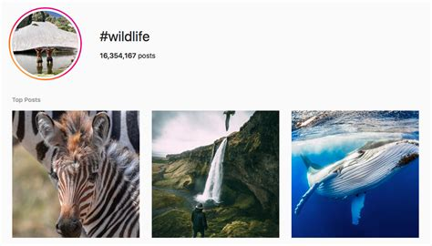 nature lover hashtags   instagrams