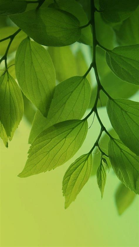 Green Tree Hd Wallpaper by Green Leaves Wallpaper 66 Images