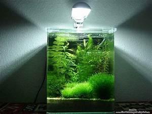 Süßwasserfische Fürs Aquarium : 1000 ideen zu garnelen aquarium auf pinterest garnelen ~ Lizthompson.info Haus und Dekorationen