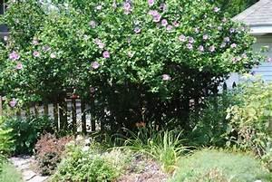 Schnell Wachsende Büsche : schnellwachsende hecke als sichtschutz welche arten ~ A.2002-acura-tl-radio.info Haus und Dekorationen