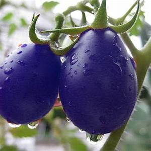 Rare 20 Seeds Purple Cherry Tomato Organic Heirloom Fruit ...