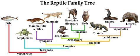 Are birds reptiles and amphibians modern dinosaurs? Quora
