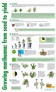 Pin On Marijuana Growing