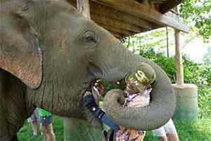What do elephants eat? - Online Biology Dictionary