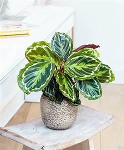 Pflanzen Die Wenig Licht Brauchen Heißen : 73 wohnzimmer pflanze wenig licht zimmerpflanzen ~ Lizthompson.info Haus und Dekorationen