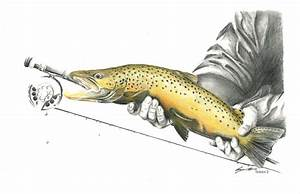 Brown Trout Drawing by Benjamin Meier