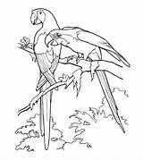 Parrot Coloring Pages Printable Realistic Cute Parakeet Cockatoo Animals Toddler Bird Momjunction Animal Popular sketch template