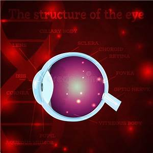 Optic Nerve Stock Illustrations  U2013 1 297 Optic Nerve Stock