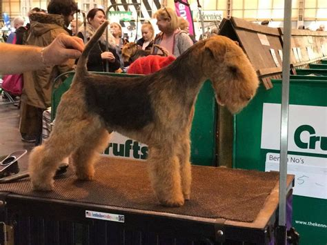 level city guilds dog grooming courses qualifications
