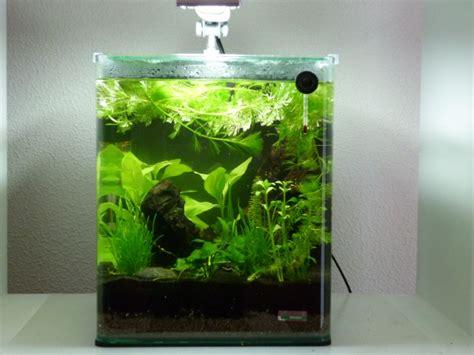 poissons pour nano aquarium eau douce le nano 20l de johan