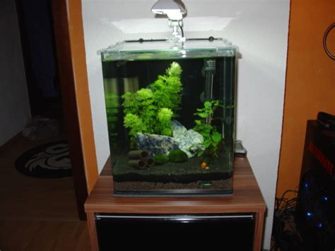 nano cube unterschrank altbauwohnung trifft nano cube aquarium forum