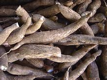 list of edible root tapioca