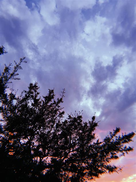 sunset phone background tree clouds aesthetic