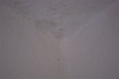 Schimmel An Den Wänden by Schimmel Entfernen An Wand Und Decke Eigenheim Abc