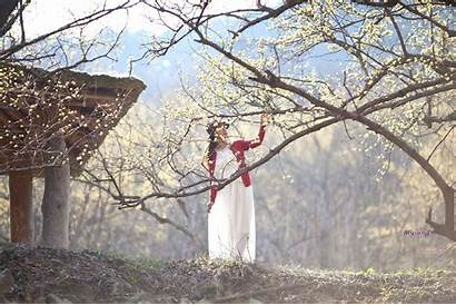 Forest Yellow Korea Lady Flowers Spring