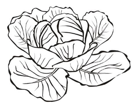 cuisine chou vert index of coloriage cuisine legumes chou
