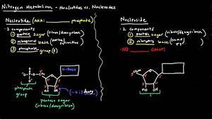 Nucleotides Vs Nucleosides