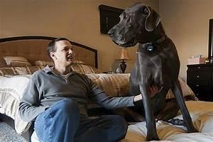 Meet 'Giant' George, a Real Life Marmaduke