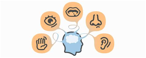 info hersenen