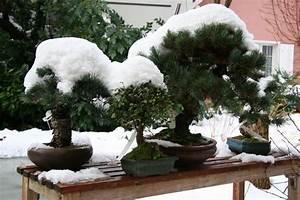 Winterharte Bäumchen Für Balkon : balkon b umchen winterhart pflanzen f r nassen boden ~ Buech-reservation.com Haus und Dekorationen