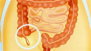 What Is The Appendix  And What Does It Do